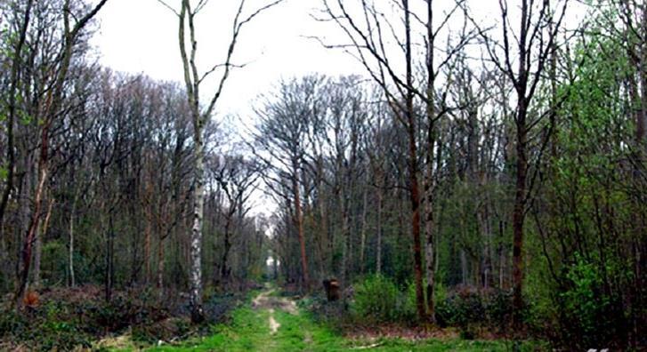 جنگل جیغ مشهد - طرقبه