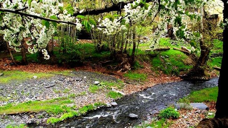 جنگل سربرج مشهد - طرقبه