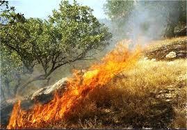 اقدامات فرهنگی برای پیشگیری از آتش سوزی در جنگل