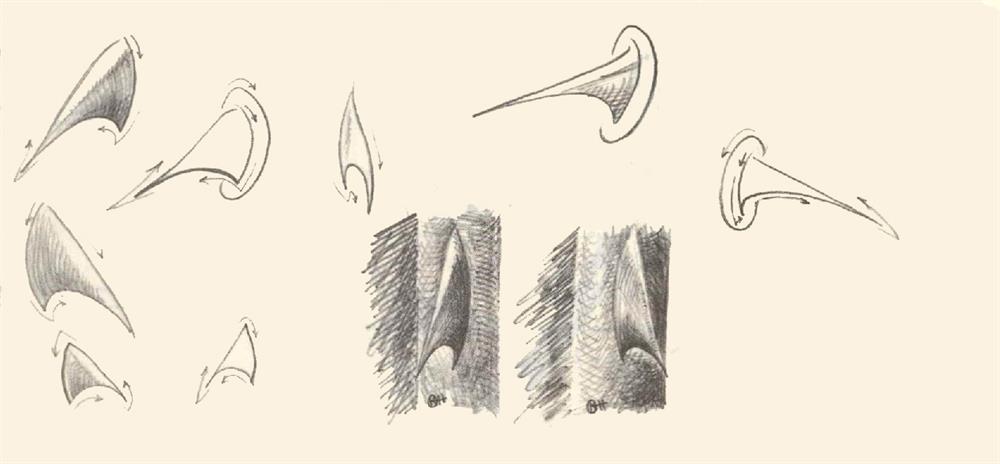 آموزش کشیدن گل رز (خارهای کج و چنگالی)
