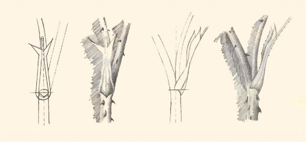 آموزش طراحی گل رز با مداد (دمبرگ)