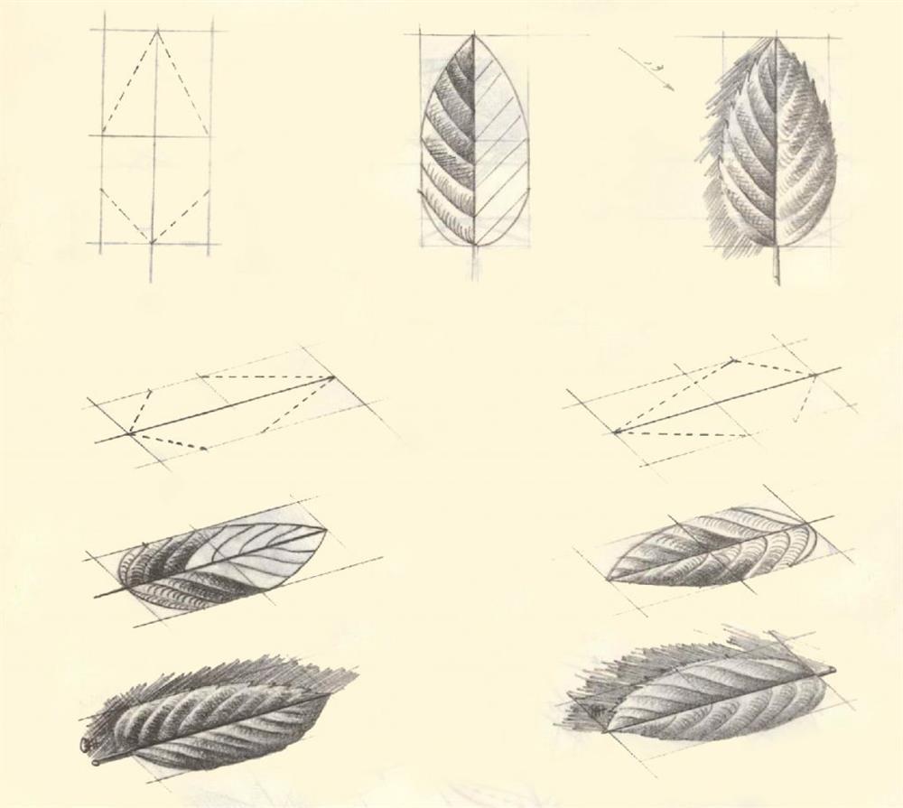 آموزش طراحی برگ گل رز