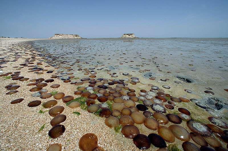 ساحل زیبای جزیره هنگام