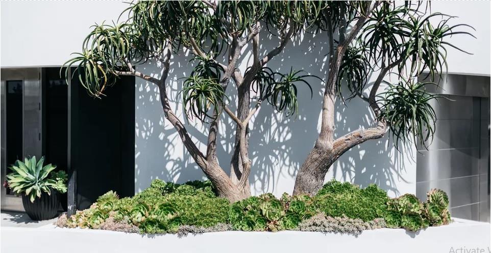 محوطه سازی حیاط