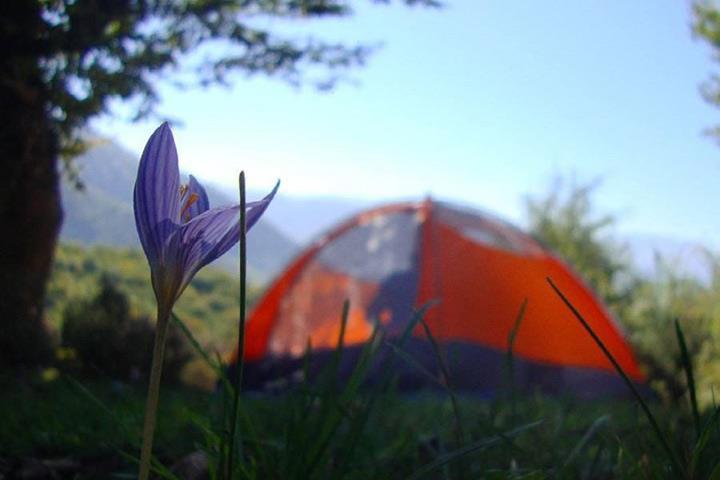 اقامت در جنگل علی مستان