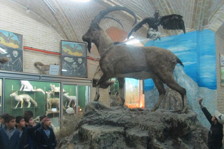 موزه تاریخی طبیعی یزد